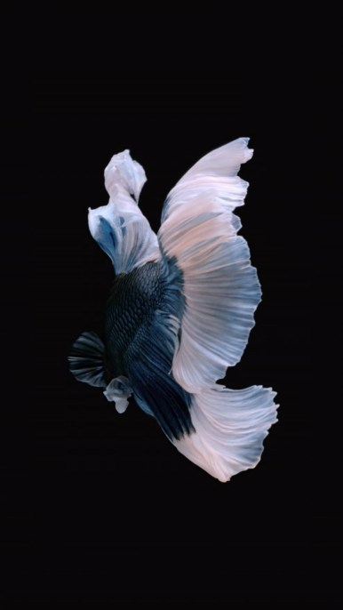 iPhone-Blue-White-Fish-Live-Wallpaper-05