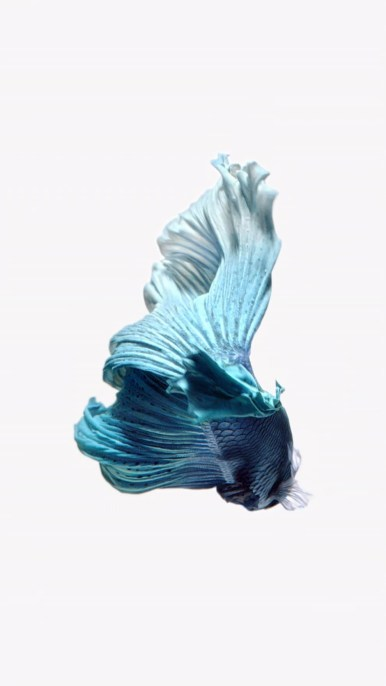 iPhone-Light-Blue-Fish-Live-Wallpaper-02