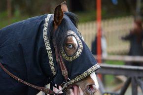 blue eyed horse