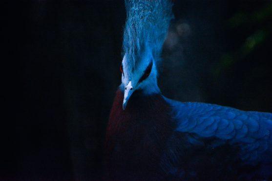 Blue Bird Kopenhagen Zoo