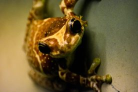 Frog Kopenhagen Zoo