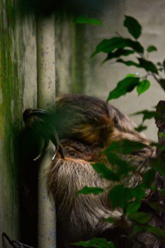 Sloth Kopenhagen Zoo