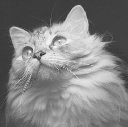 Может ли кошка после родов забеременеть. Когда кошка может забеременеть после родов. Когда кошка может забеременеть снова после родов