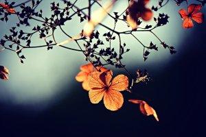 flower, branch, twig