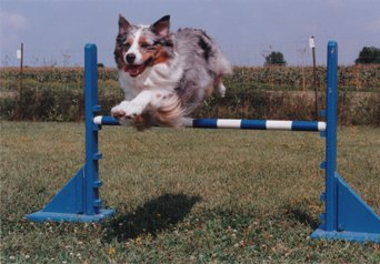 tommy agility jump