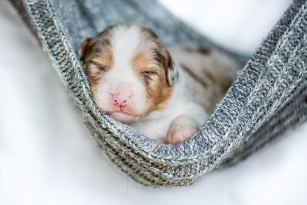 Sunny puppy 2021 2w