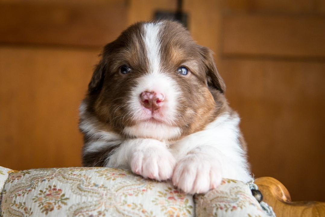 Jack puppy 2021 3w
