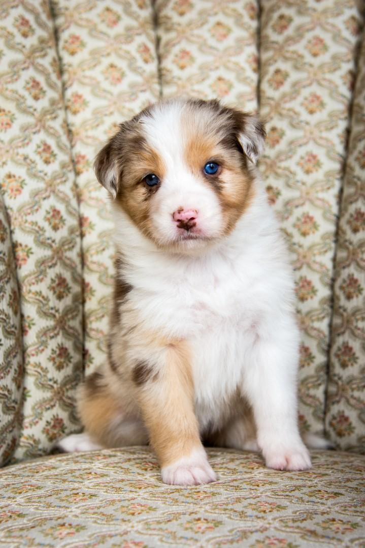 Sunny puppy 2021 5w