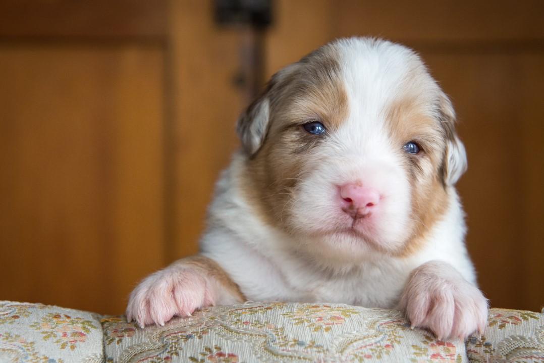 Sunny puppy 2021 3w