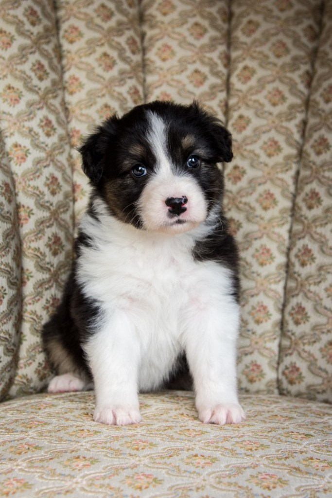 Rilye puppy 2021 5w