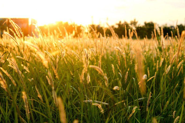 Chỉ là gió trên cánh đồng