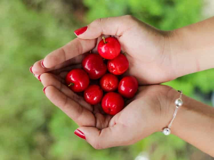 Tart cherries