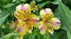 fleurs 5