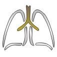 Λογότυπο Πνευμονας