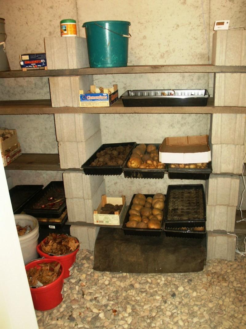 хранение овощей в подполье частного дома