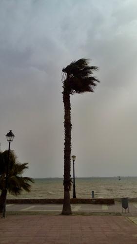 Palma ve větru