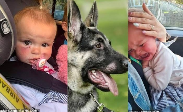 Dog Bites 18-Month-Old Baby In Face, Missing Her Eye By Fraction Of An Inch In Unprovoked Attack