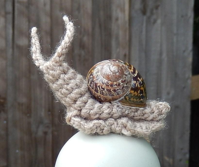 820Little Snail