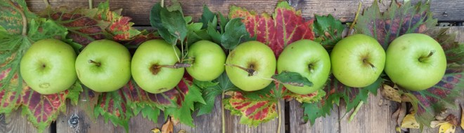 apples-line
