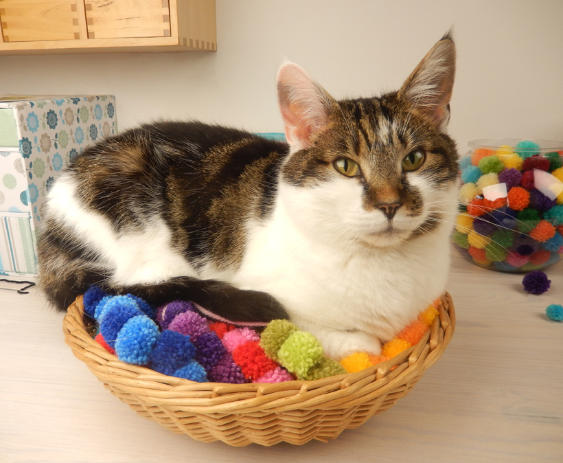 Minnie-in-the-basket