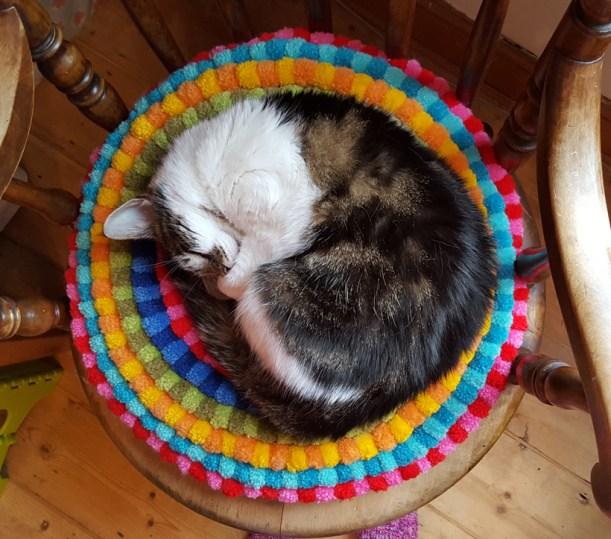 circular-cat