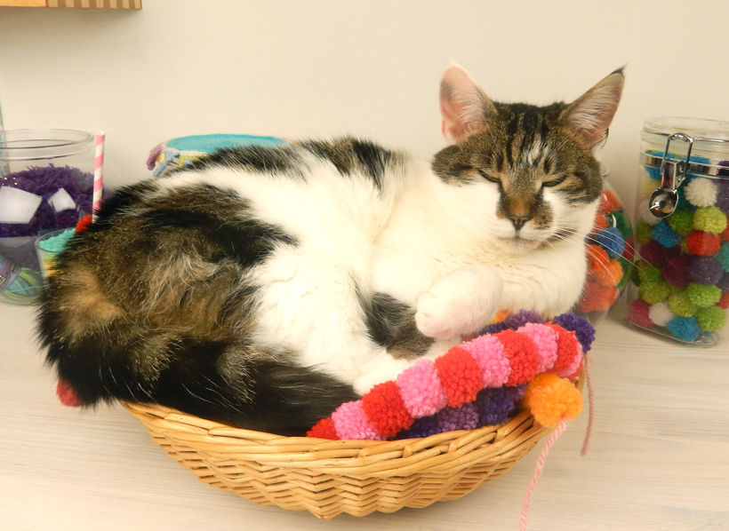 minnie-basket