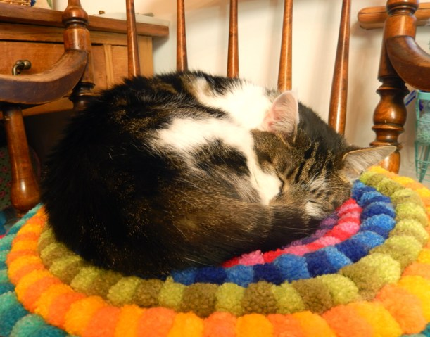 minnie-curled-up