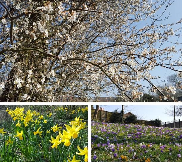 spring-montage