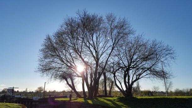 trees-at-the-lock