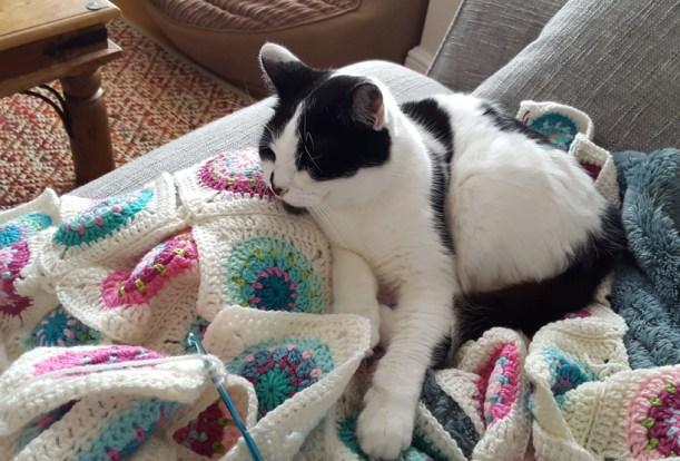 cat-and-crochet