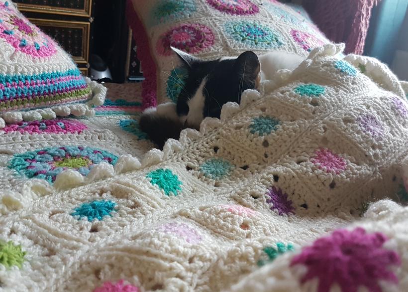 mojo-and-spring-dots-blanket