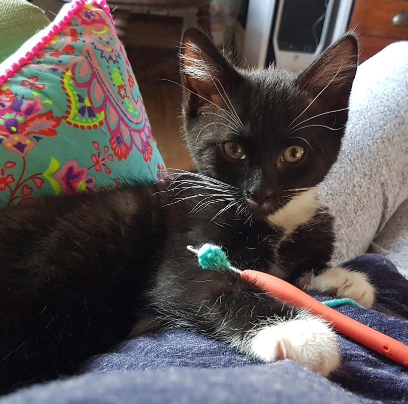 Rubick-learns-to-crochet