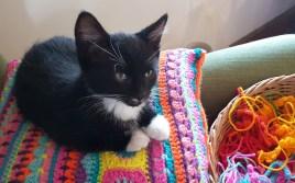 Rubick-the-kitten