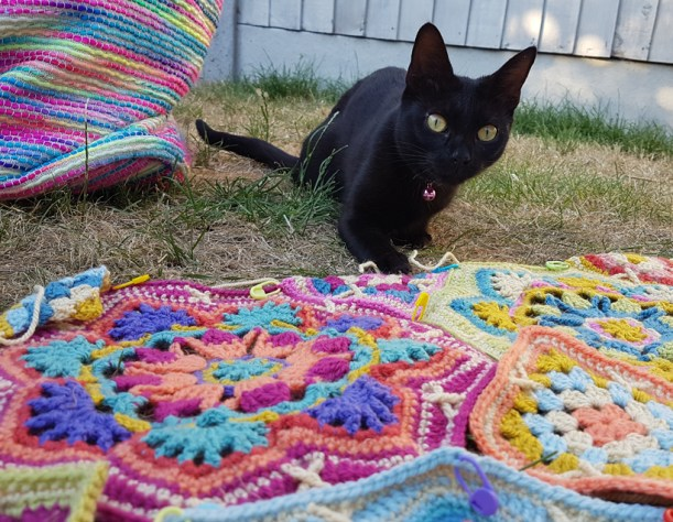 the-neighbours-cat-pays-a-vist