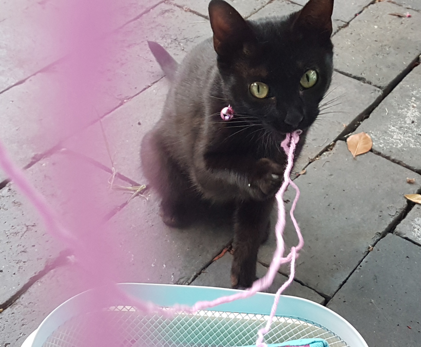 Lacey-yarn-eater