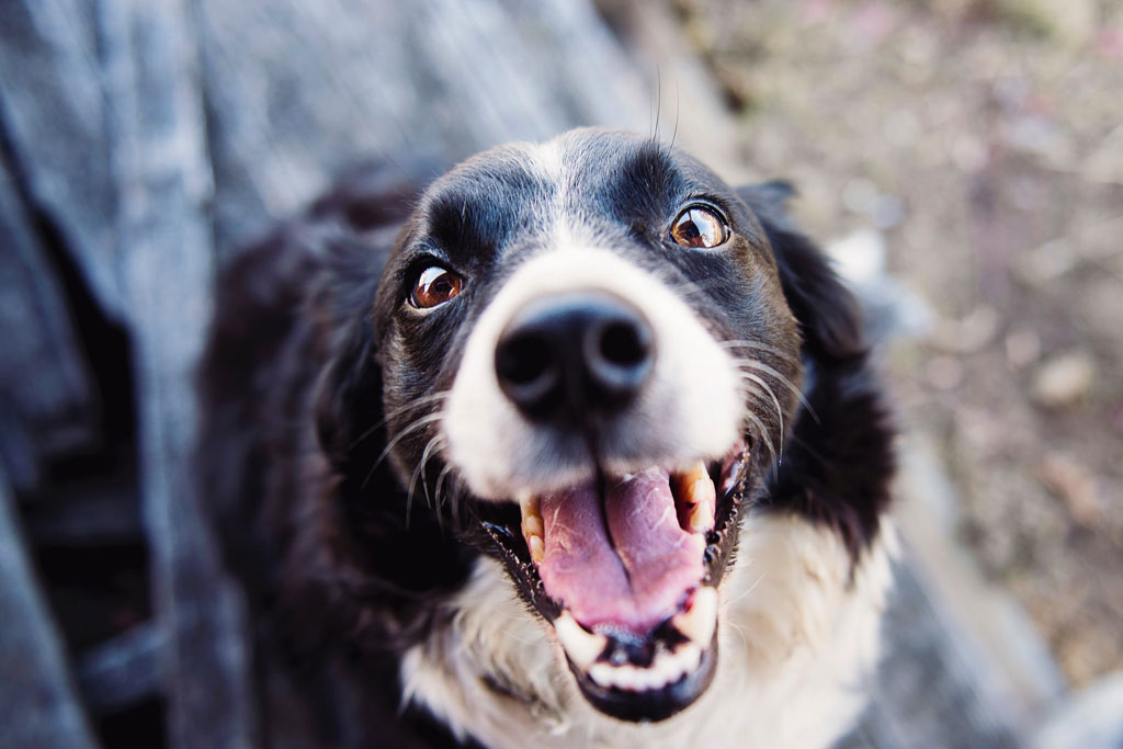 Rheumatism and Arthritis in a Dog