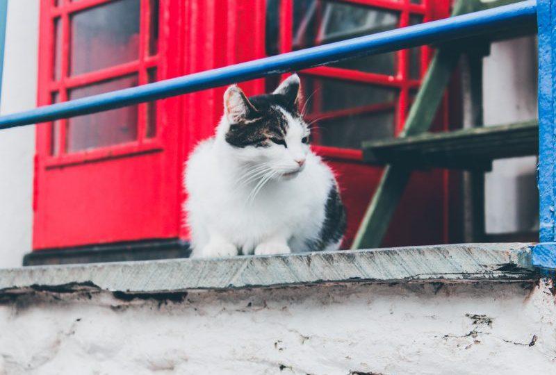 kecoa dan kucing