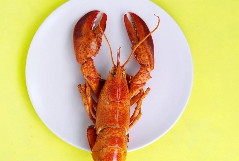 Pak Menteri, Kebijakan Ekspor Benih Lobster Itu Sungguh Brilian!
