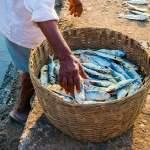 Starter Pack Petani Tambak Sebelum Memanen Ikan Tengah Malam