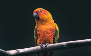ngomongin burung