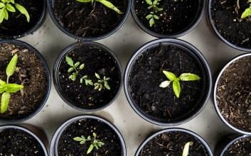 Memang Betul, Berkebun di Masa Pandemi Itu Ternyata Mengasyikkan sayuran