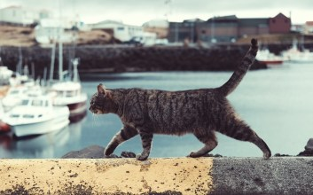 Persahabatan Tom dan Jerry yang Sering Disalahartikan sebagai Pertikaian Abadi Menghitung Pendapatan Kucing Kampung di Tengah Pandemi Corona