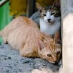 kucing jalanan kucing kampung kucing ras stray cat street feeding memberi makan kucing jalanan mojok.co