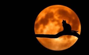 kucing mengusir setan hantu makhluk halus jin genderuwo mojok.co