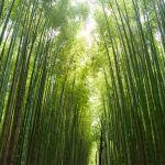 bambu runcing mojok