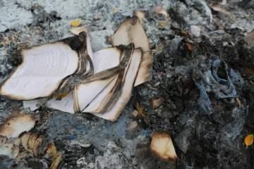 Tokoh Sastra Paling Berpengaruh di Galapagos dan Otaknya yang Seukuran Kacang Polong