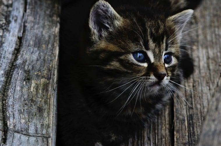 Kucing Saya Gay dan Dia Tidak Merusak Moral Bangsa