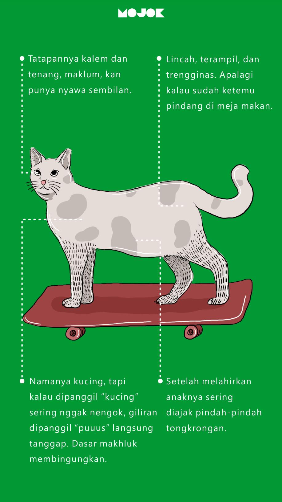 infografis kucing