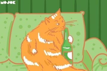 Bikin Video Kucing Dicekokin Ciu Itu Riset yang Nggak Masuk Akal! MOJOK.CO