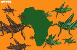wabah serangan belalang gurun di afrika dampak perubahan iklim tanda kiamat mojok.co